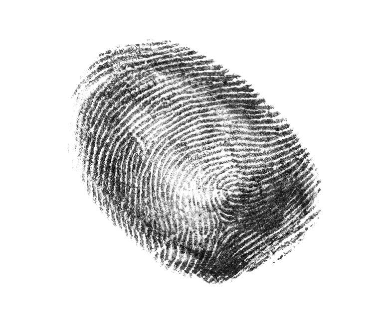 Black fingerprint on white background. Friction ridge pattern